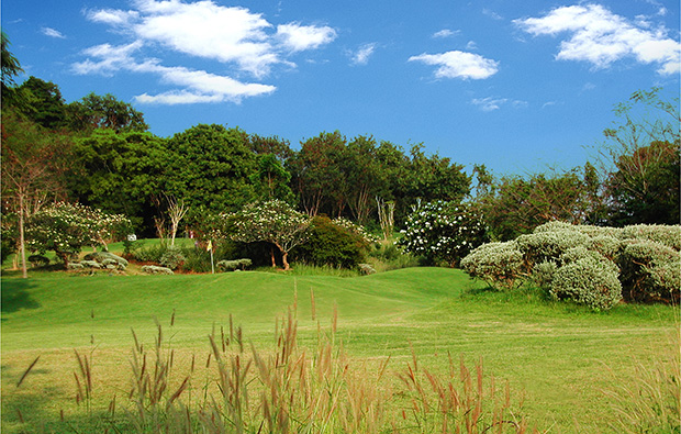 plants and trees, rayong green valley country club, pattaya, thailand